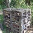Build a Bug Barn -