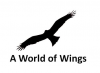 A World of Wings